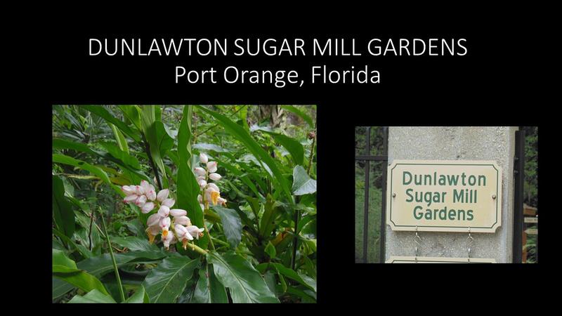 Zenfolio Joseph Czerwinski Dunlawton Sugar Mill Gardens Port Orange Florida